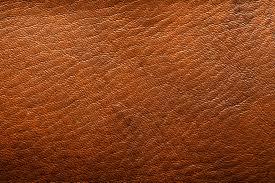 moisissure cuir